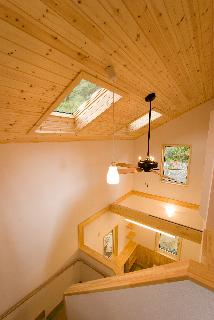天井パイン