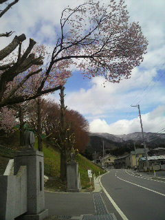 大船渡高校の桜並木